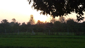 At sunset, Faridabad, India New Year's on an Indian Farm