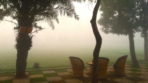Snapshot of the courtyard in the early mornings; Fog is persistent in Deli NCR
